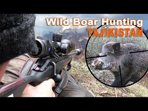 Wild boar hunting in Tajikistan / 2021
