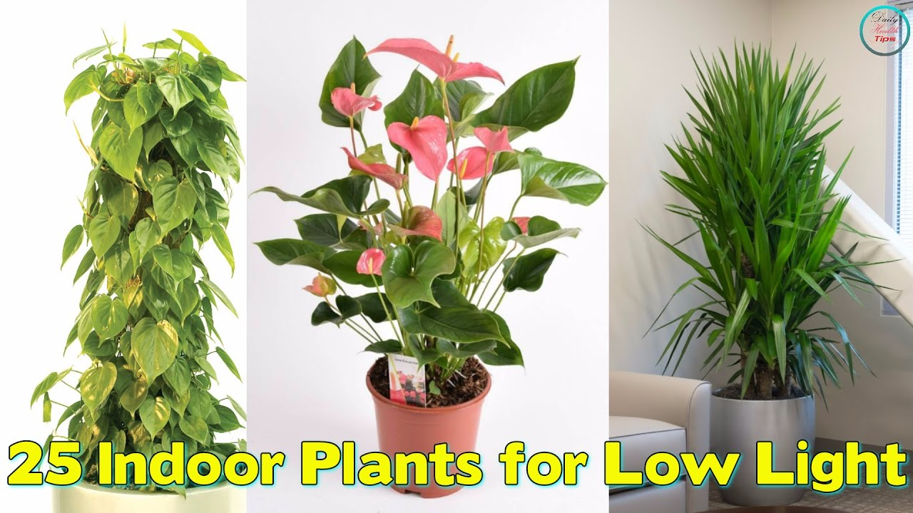25 indoor plants for low light youtube for Best no maintenance plants