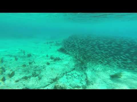 Massive school of fish and huge barracuda. Amazing! - Grand Cayman