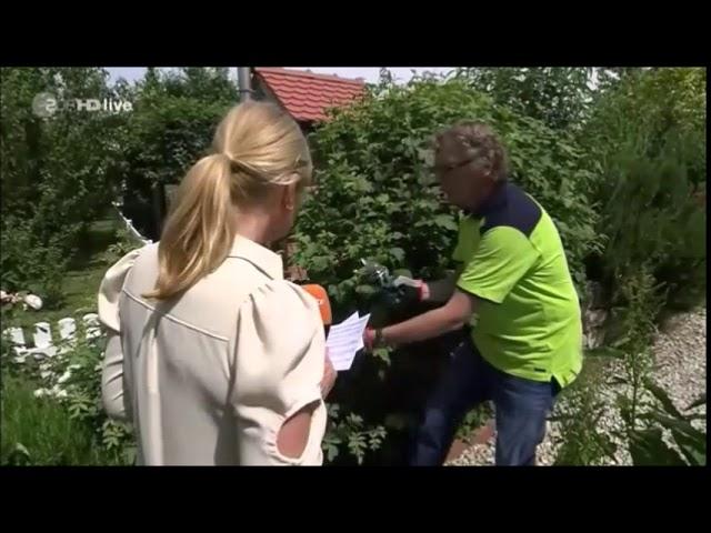 ZDF-Fernsehgarten: Blattläuse von Rosen mit natürlichen Mitteln vertreiben