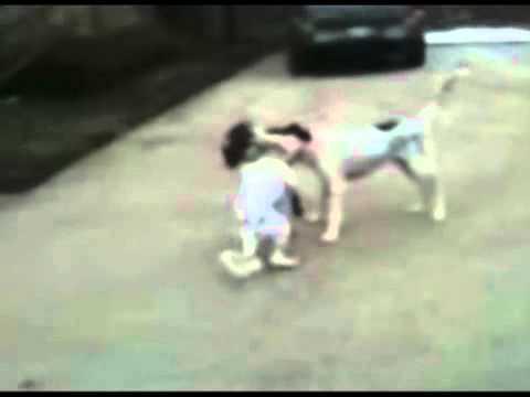 Video Chó giả chết điệu nghệ   Phi thuong   ky quac 24h