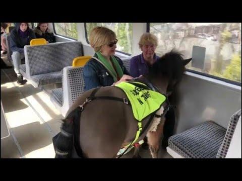 شاهد: حصان مرشد للمكفوفين في بريطانيا  - نشر قبل 5 ساعة