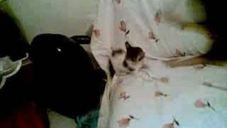 חתול תוקף כלב - איזה צחוק...