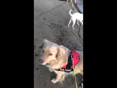 Suria on a walk