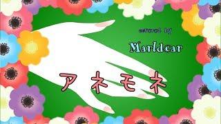 杏子 - アネモネ