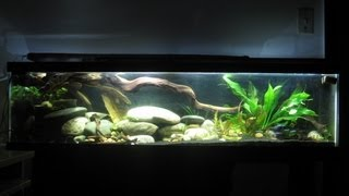 33 gallon long tank corydora habrosus