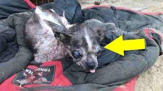 최악의 개농장에서 구조된 작은 강아지 사연 - 감동바다
