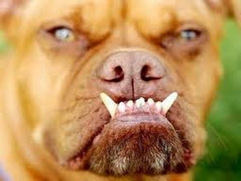 Resultado de imagem para cachorros bravos fotos