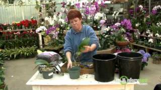 Repot an Orchid with Moss