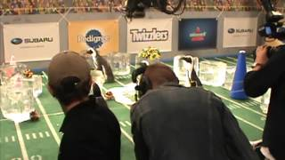 Behind The Scenes At Puppy Bowl X