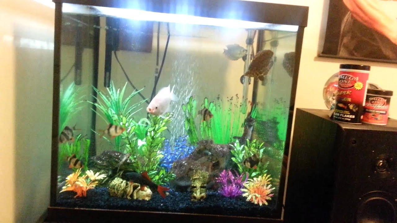 Acrylic Aquarium Seaclear Custom Modify Part 1