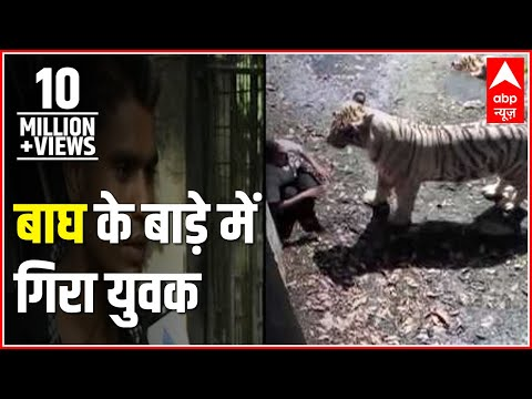 ABP News special l Tiger at Delhi Zoo mauls youth to death