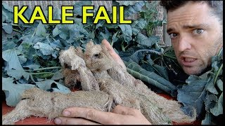 kale-fail-root-ball-explosion-3-nft-hydroponics