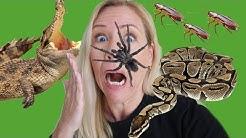 Leben mit Spinnen, Kakerlaken, Schlangen & Alligatoren in den USA 🕷️🐍🐊| Sissi die Auswanderin 🇺🇸