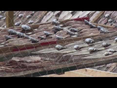 Secado de pescado en Nazaré / Peixe seco en Nazaré Portugal