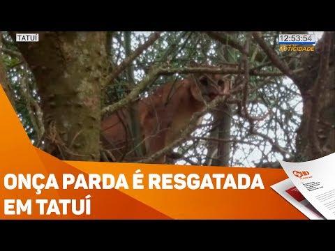 Onça parda é resgatada em Tatuí - TV SOROCABA/SBT