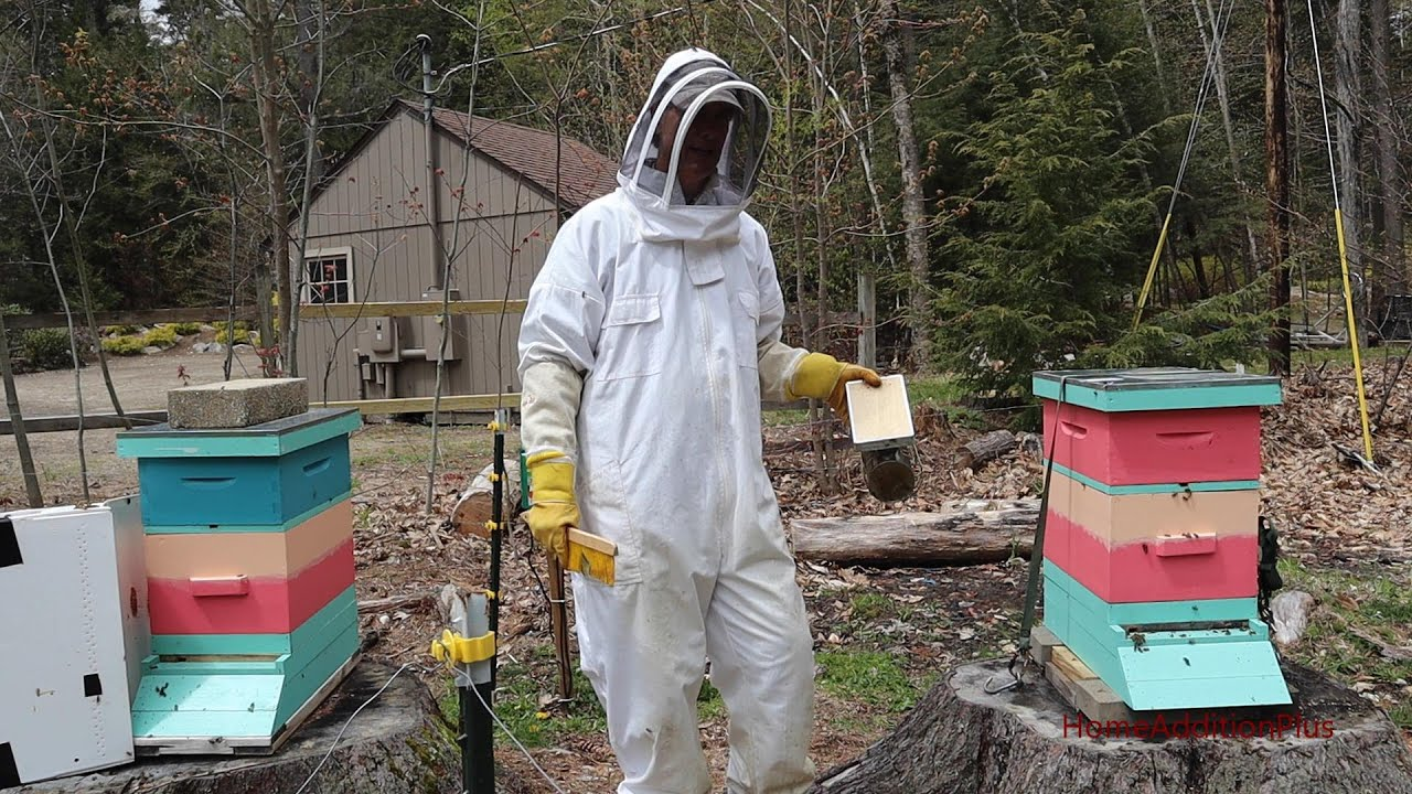 How To Install A Honey Bee Nuc