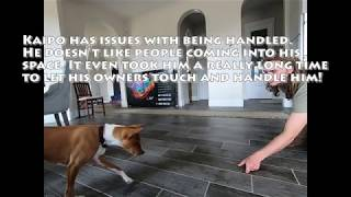 Basenji training (sessions 1 & 2)