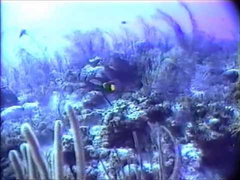 Underwater Cayman Brac, B W I
