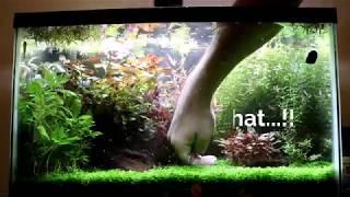 How To Maintain Planted Aquarium | Plants trim