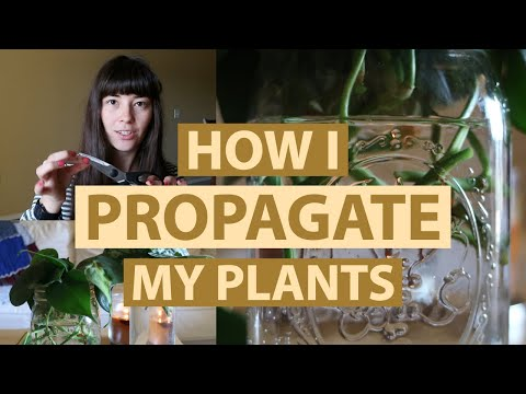 HOW I PROPAGATE MY PLANTS | Plant Care