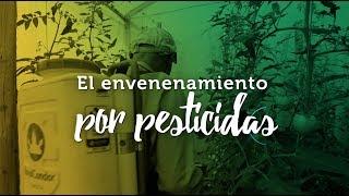 Un ambiente libre Agrotóxicos