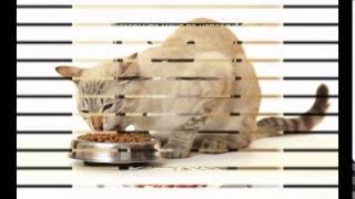 кормление кошек сухим кормом