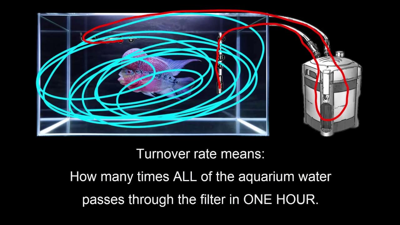 Flowerhorn aquarium turnover rate youtube flowerhorn aquarium turnover rate nvjuhfo Gallery