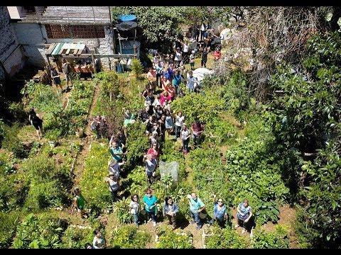 horta-comunitÁria-da-saÚde-4-anos,-plantar-em-casa