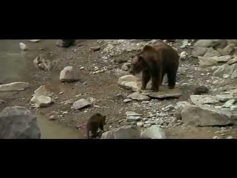 The 1989 Film The Bear