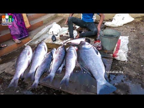INDIA'S BIGGERT FISH MAKET | INDIAN FISH MARKET street food