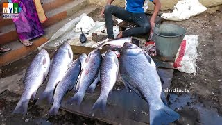 INDIA'S BIGGERT FISH MAKET | INDIAN FISH MARKET