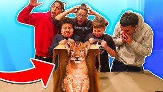 what-s-in-the-box-challenge-live-animals