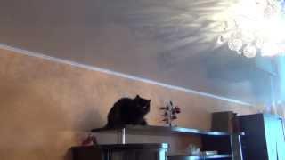 Заглянем в глаз Кошки камерой высокой четкости Кошка охотится на паука Cat hunts on a spider