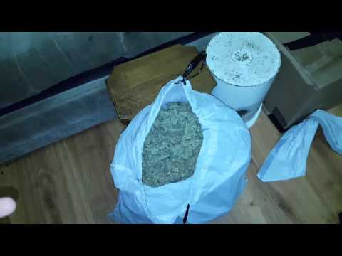 World's Largest Auto Marijuana Yield from one plant    3 POUNDS   Plus growing tips