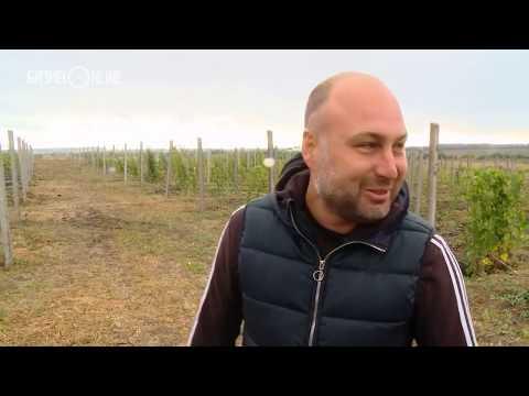 Бизнес на селе #33  Как обычный парень виноградную долину в Татарстане создал