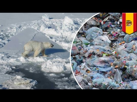 Arctic pollution: Plastic waste dumped in ocean makes its way into Arctic waters - TomoNews