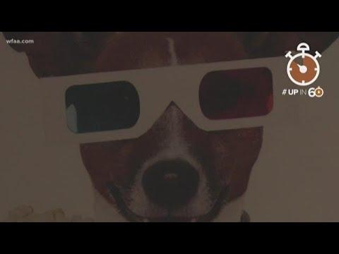 Craig Stevens - Enjoy bottomless wine at this dog friendly theater