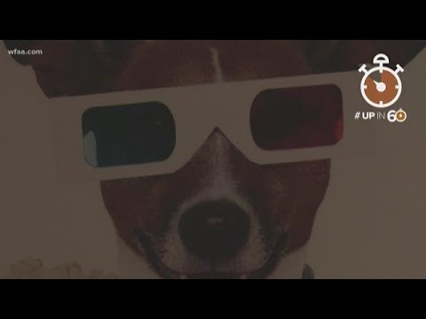 Take your dog to the movies? Why not! Plano theater is pup friendly