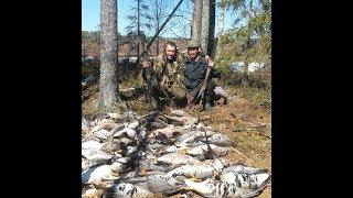 Охота на гусей весна 2017 (северные болота)