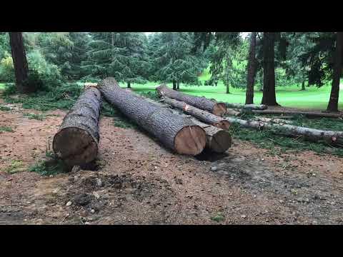 Seattle Golf Club Logging