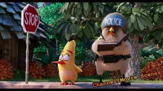 The Angry Birds Movie Funny Moments