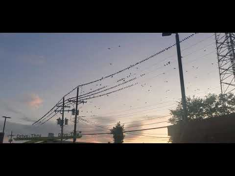 Why Birds Love Electric Wires?