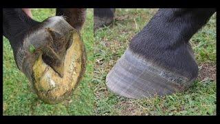 Pourquoi je suis contre le ferrage des chevaux !