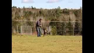 "Tonny Naspo - ""tawny"" - Obedience Training - Beginning Of Week 3"