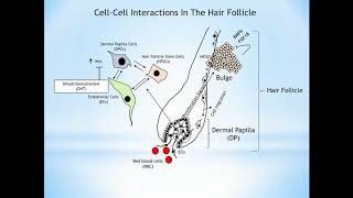 Stem-cell therapies for androgenic alopecia- Video Abstract ID 138150