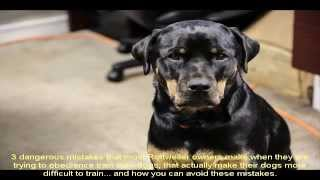 Dog Rottweiler Training Guide