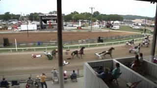 Harness Racing Wreck 2014