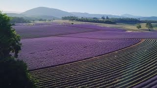Bridestowe Lavender: Harvesting global business from rural Australia