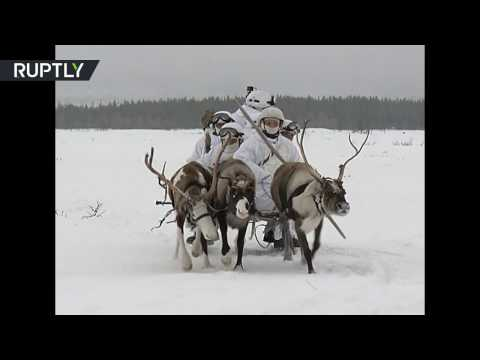 Arctic power: Reindeers & huskies take part in Russian troop drills